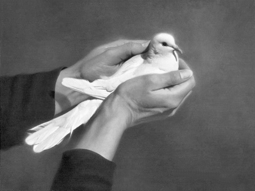 картинки с изображением голубь в руке
