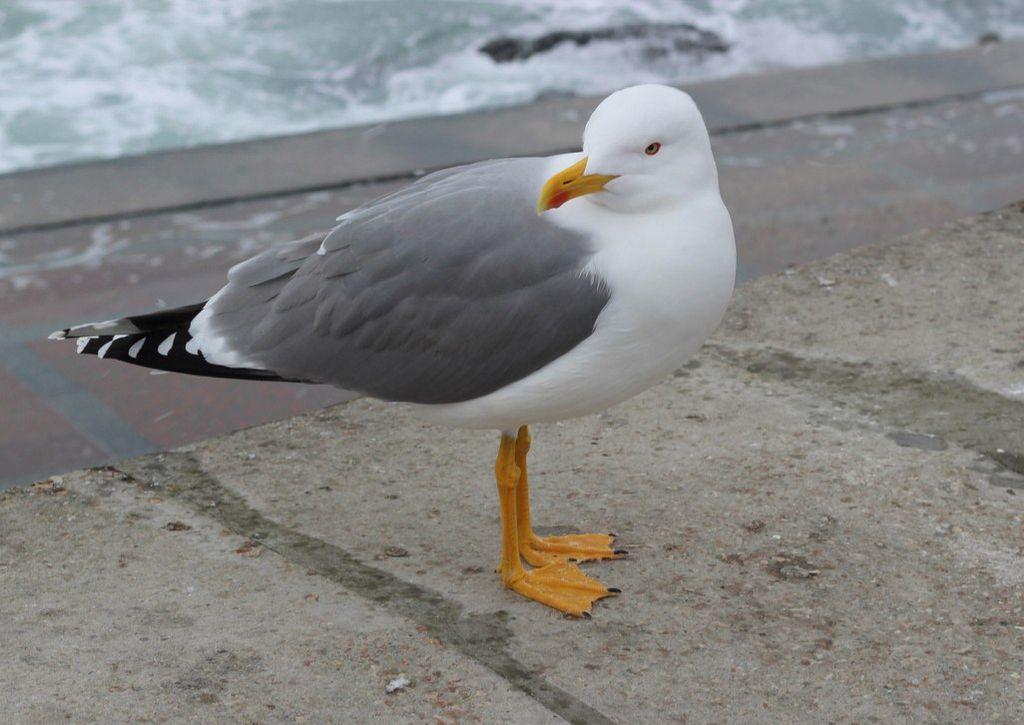 все птицы крыма фото и названия