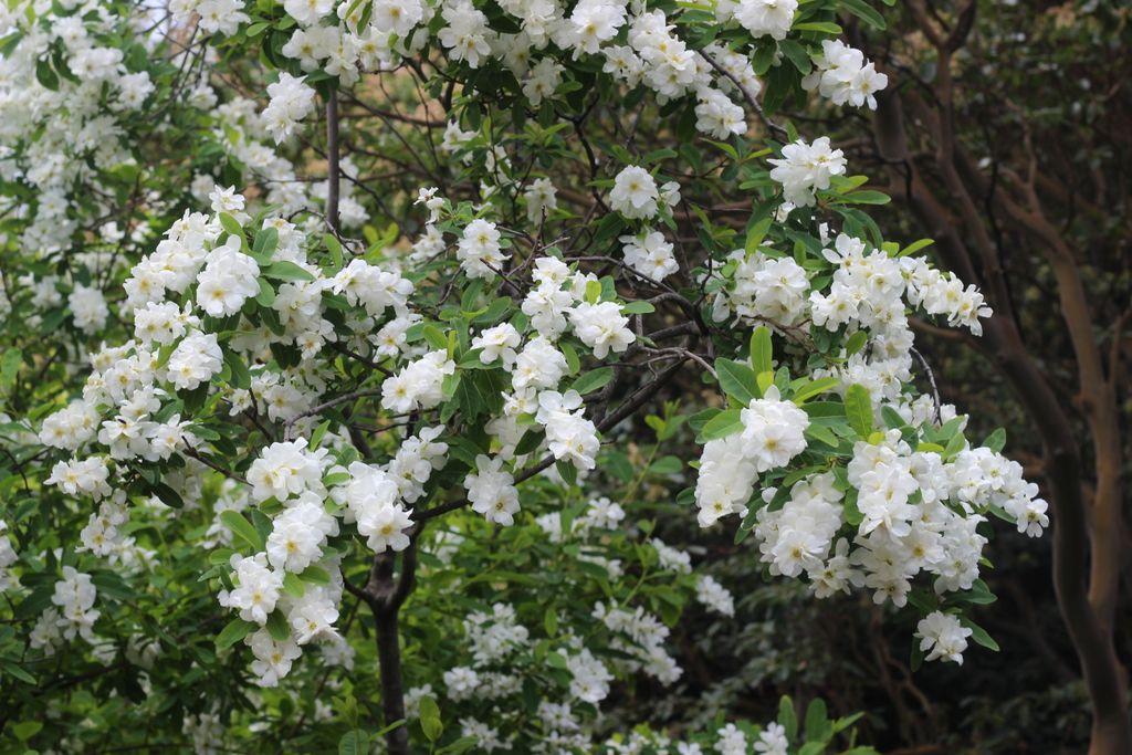 Тропический цветы картинки с названиями вас